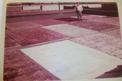 Historic Mercer Rug Cleaning, Virginia